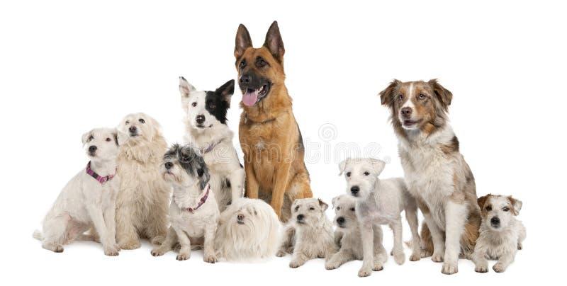 Gruppo di cane: pastore tedesco, collie di bordo, parità fotografia stock libera da diritti