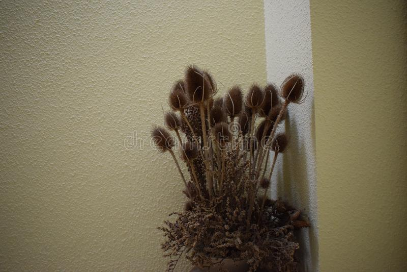 Gruppo di cardi selvatici appassiti in un vaso dentro una casa fotografia stock