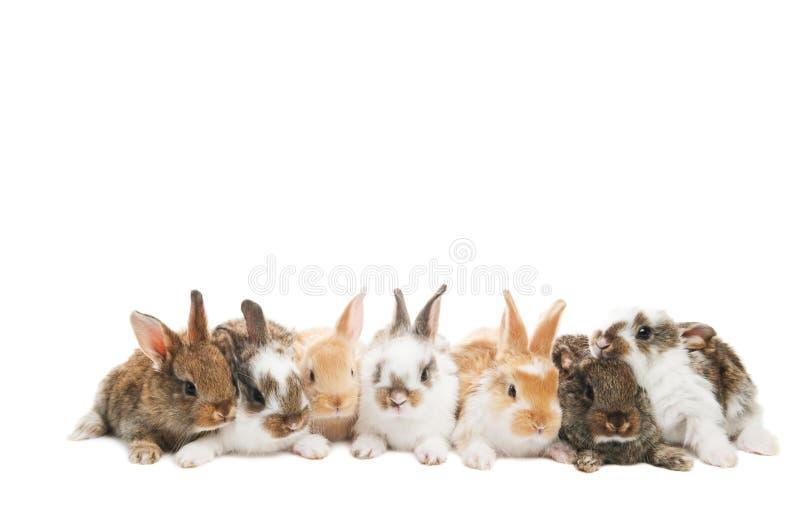 Gruppo di conigli in una riga fotografia stock