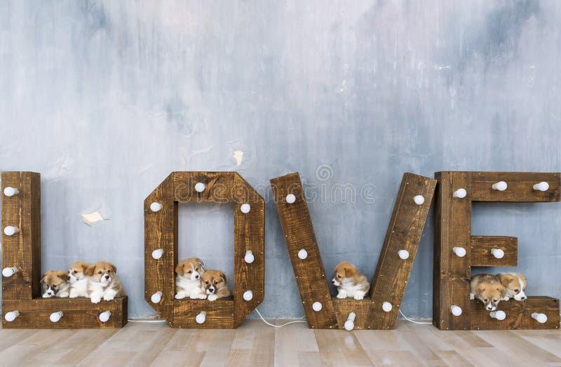 Gruppo di cuccioli svegli contro lo sfondo dell'amore di parola fotografie stock libere da diritti