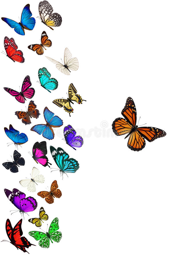 Gruppo di farfalla di volo illustrazione di stock