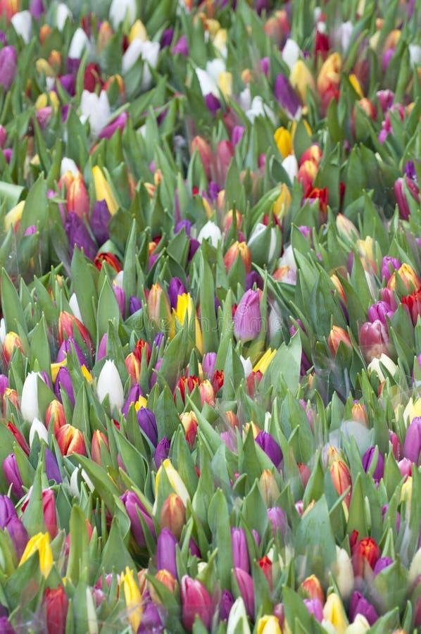 Gruppo di fiori del tulipano fotografie stock libere da diritti