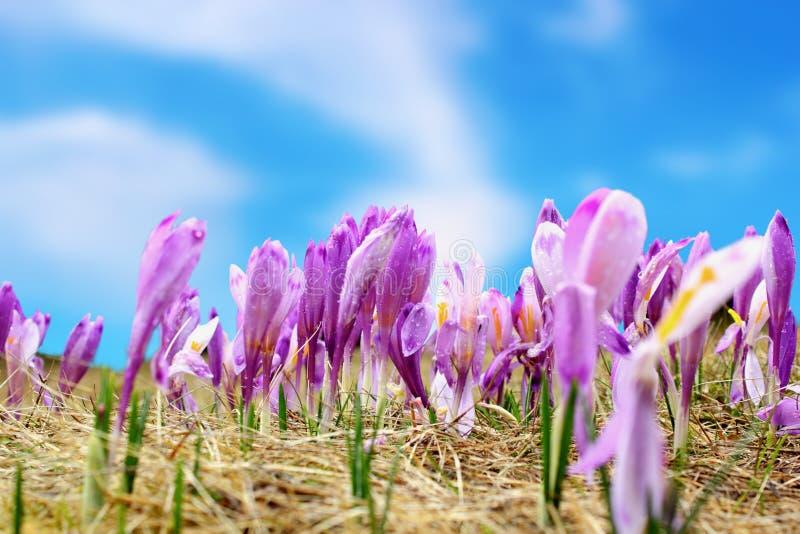 Gruppo di fiori selvaggi della molla immagine stock libera da diritti