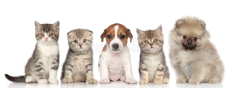 Gruppo di gattini e di cuccioli immagine stock libera da diritti