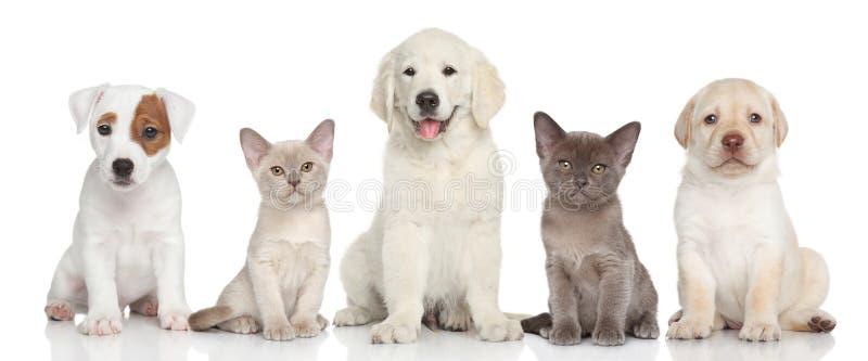 Gruppo di gattino e di cuccioli immagine stock