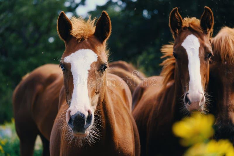 Gruppo di giovani cavalli fotografie stock libere da diritti