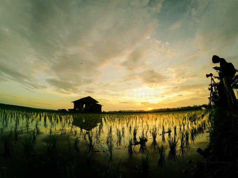 Gruppo di immagine della siluetta di fotografo che prende a foto casa sola circondata dal germoglio verde della risaia alla nuova immagini stock