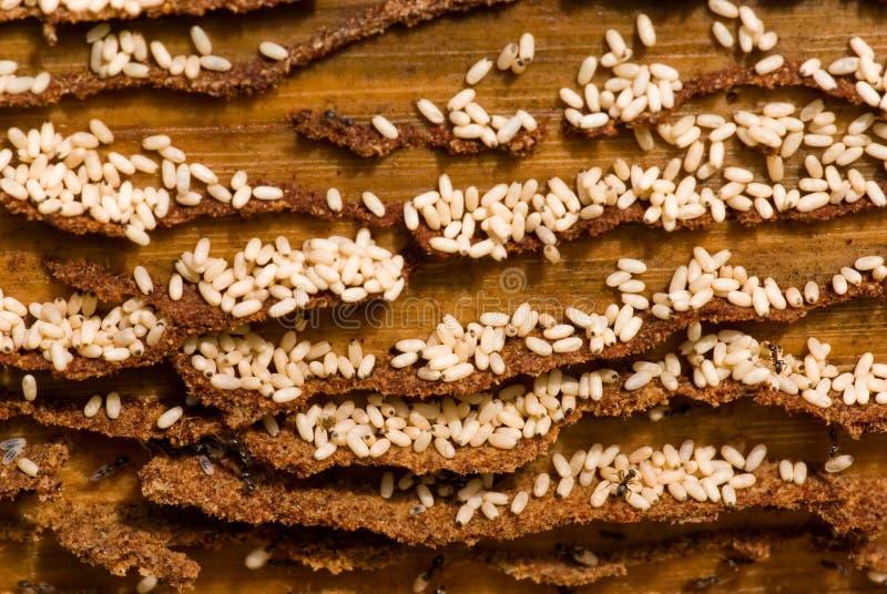 Gruppo di lavoro delle formiche. fotografie stock libere da diritti