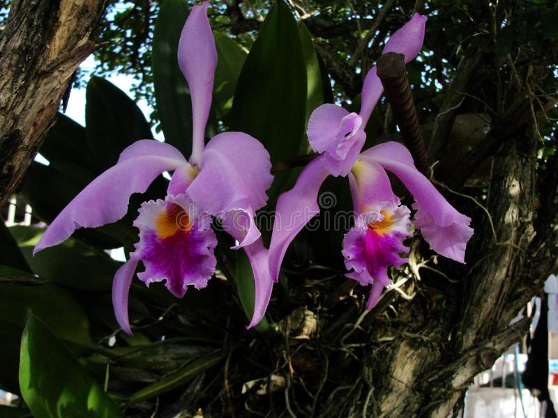 Gruppo di orchidee con la natura nei precedenti su un tempo tropicale nel Venezuela fotografie stock libere da diritti