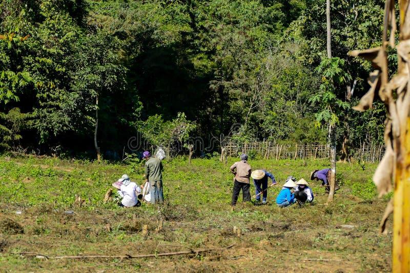 gruppo di persone nel parco, immagine digitale della foto come fondo fotografia stock libera da diritti