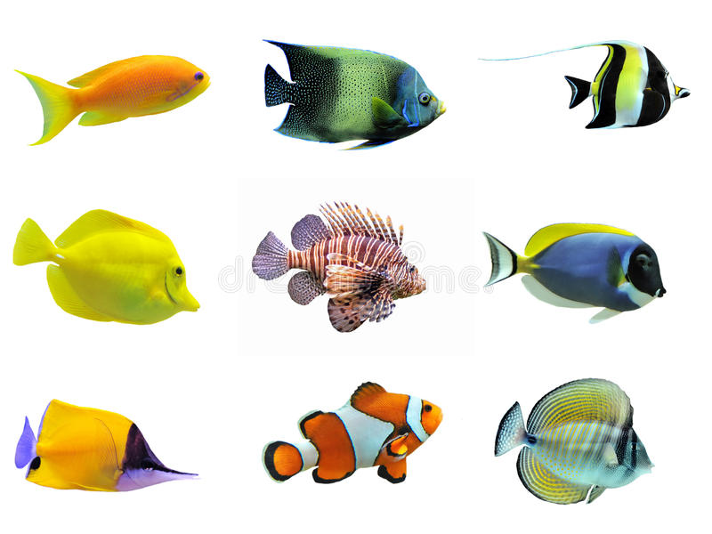Gruppo di pesci fotografie stock libere da diritti