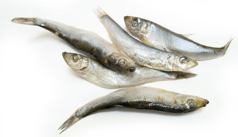 Gruppo di pesci dello spratto immagini stock