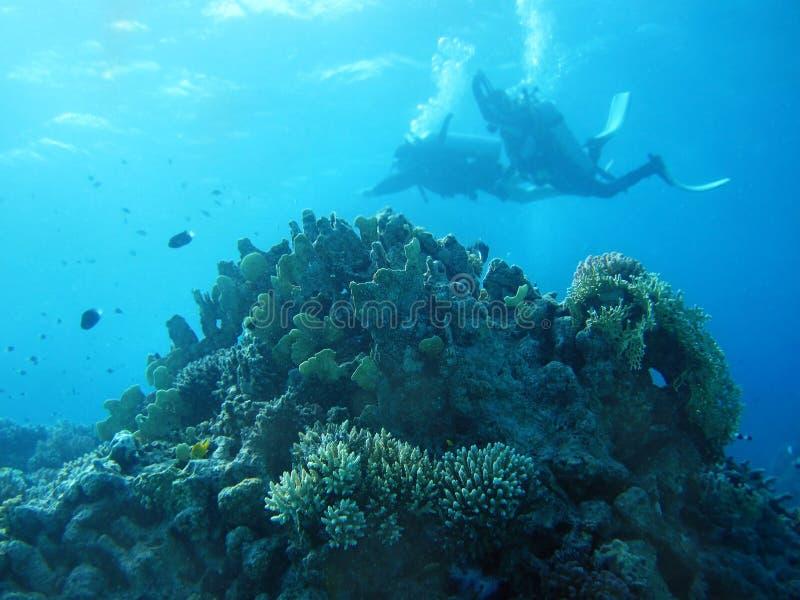Gruppo di pesci di corallo in acqua blu. fotografia stock