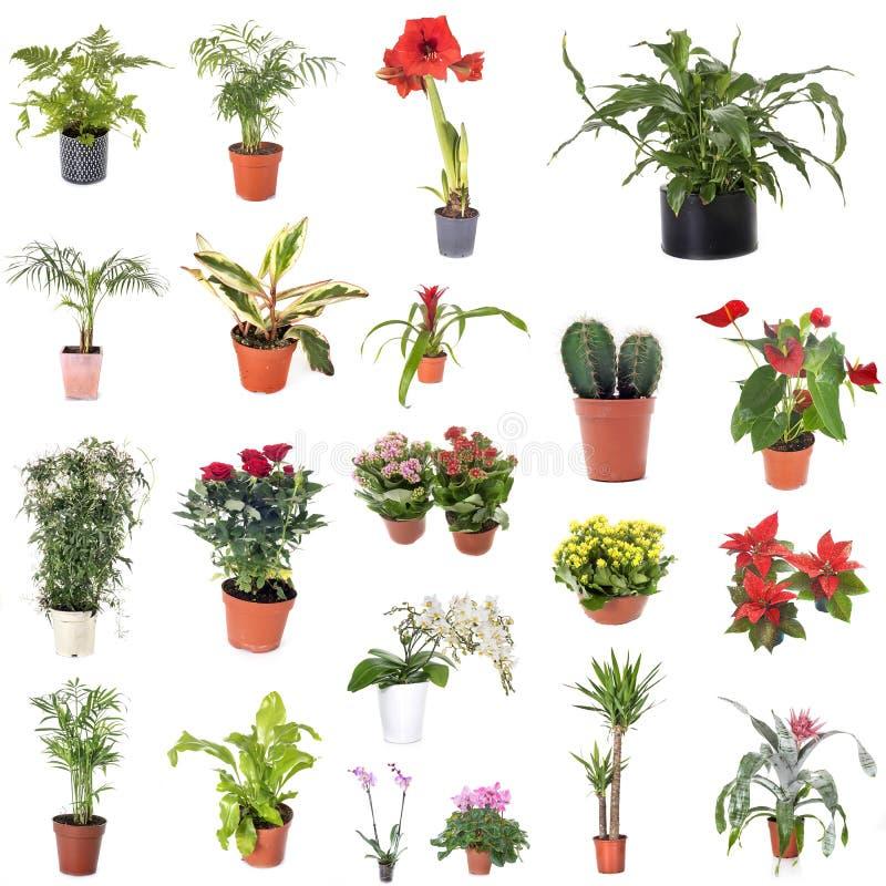 Gruppo di piante della casa fotografia stock