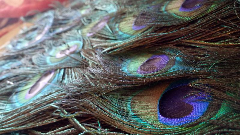 Gruppo di piume del pavone in tavola immagine stock