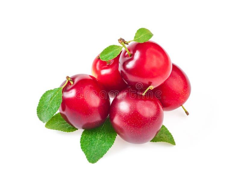Gruppo di prugne rosse mature dolci con le foglie, isolato sul BAC bianco fotografia stock libera da diritti