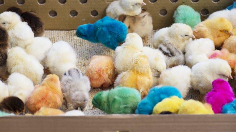 Gruppo di pulcini del neonato portati per la vendita al bazar in scatola di carta spessa immagini stock