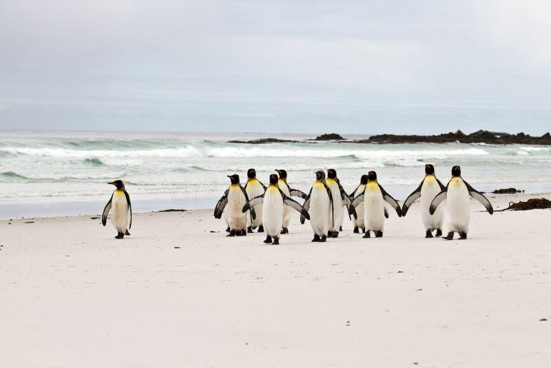 Gruppo di re Penguins fotografie stock libere da diritti