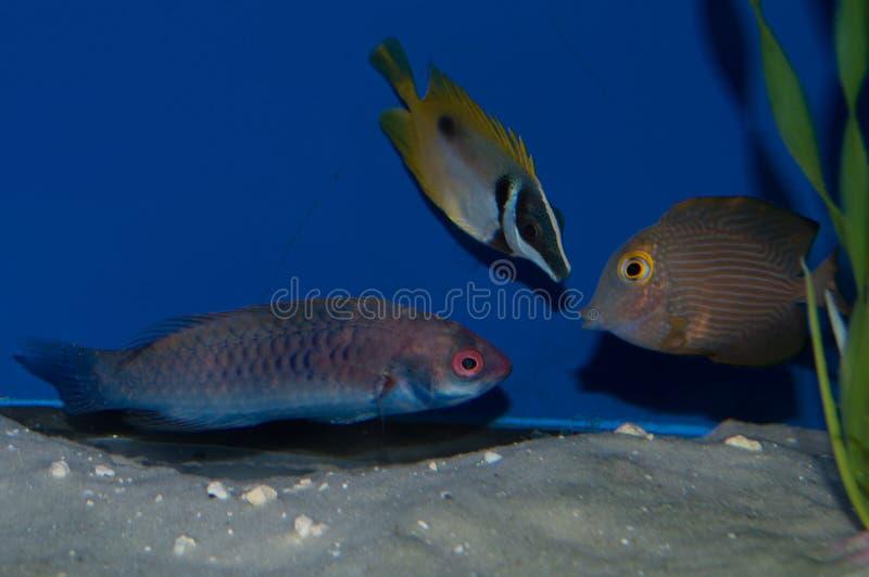 Gruppo di Saltwaterfish fotografia stock libera da diritti