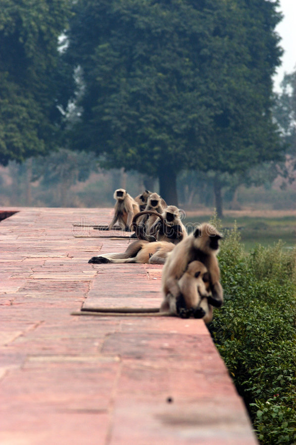 Gruppo di scimmie fotografia stock libera da diritti