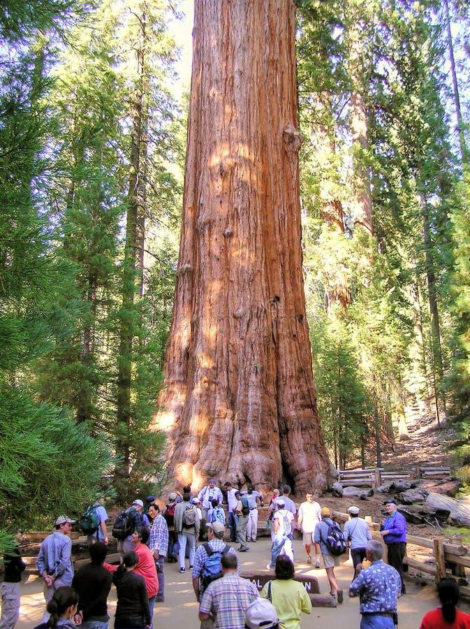 Gruppo di turisti da Sherman Tree generale nel parco nazionale della sequoia immagine stock libera da diritti