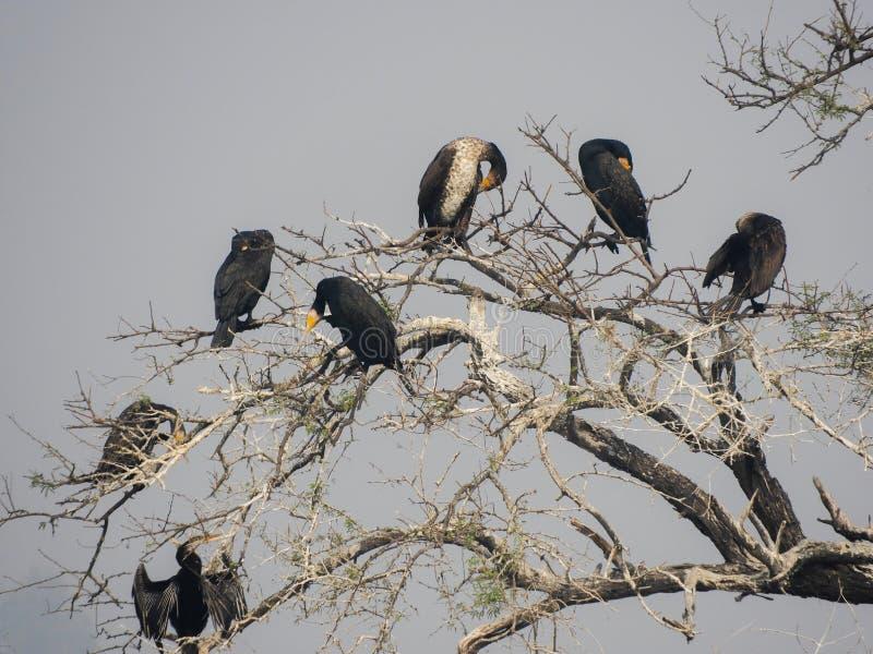 gruppo di uccelli fotografia stock libera da diritti