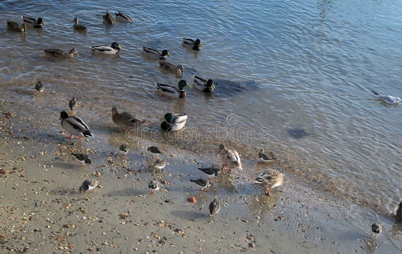 Gruppo di uccelli marini sulla riva fotografie stock libere da diritti
