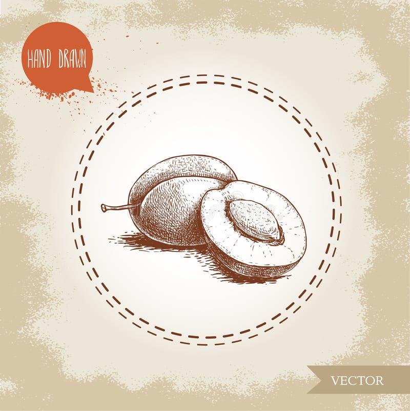 Gruppo disegnato a mano delle prugne di stile di schizzo Tutto e metà con il seme Illustrazione organica di vettore della frutta  illustrazione vettoriale