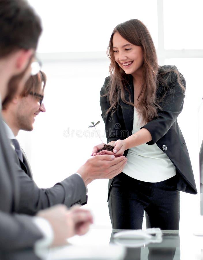 Gruppo felice di affari che tiene un germoglio fresco fotografie stock