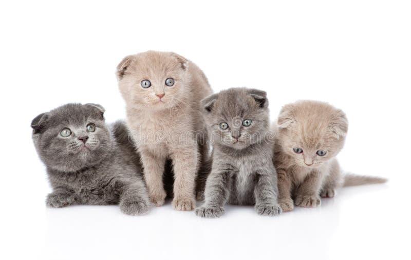 Gruppskotten behandla som ett barn kattungar bakgrund isolerad white arkivfoto