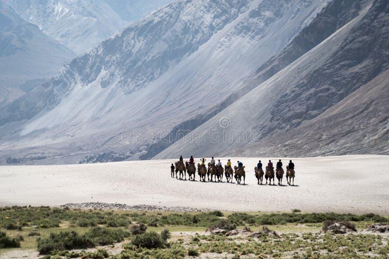 Grupy ludzi jazdy kopii garbu wielbłądy na piasek diunach Nubra dolina, India obrazy stock