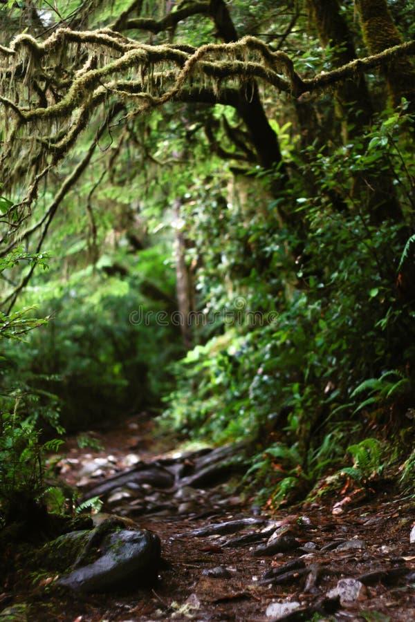 Gruselige crawly Spur im Wald lizenzfreie stockbilder