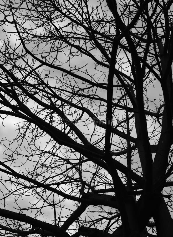 Gruseliger Baum lizenzfreies stockbild