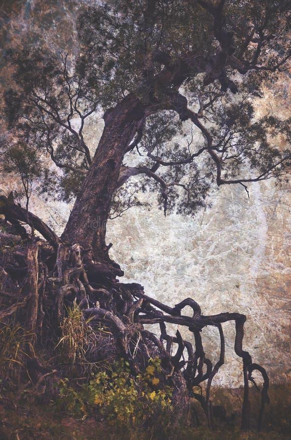Gruseliger Baum mit herausgestellten verwirrten Wurzeln lizenzfreie stockbilder