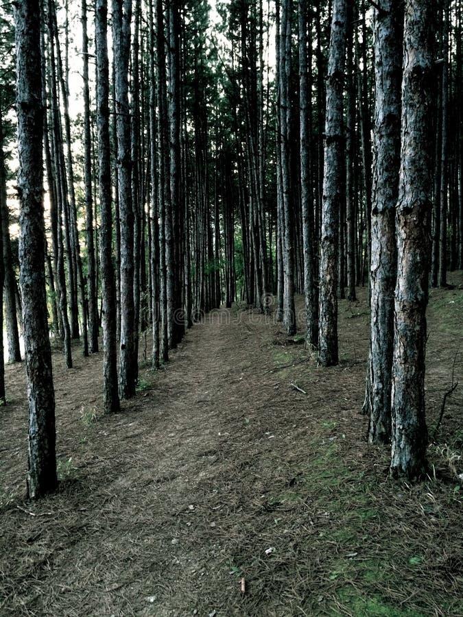 Gruseliger Wald stockfoto