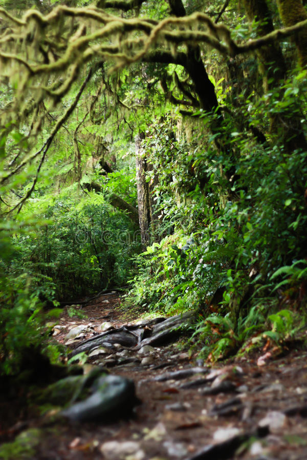 Gruseliges crawly Holz in Jedidiah Smith Redwood Park stockfoto