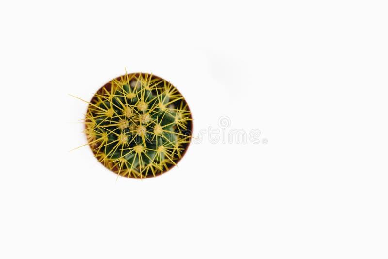 Grusonii d'Echinocactus d'isolement sur la vue supérieure de fond blanc image stock