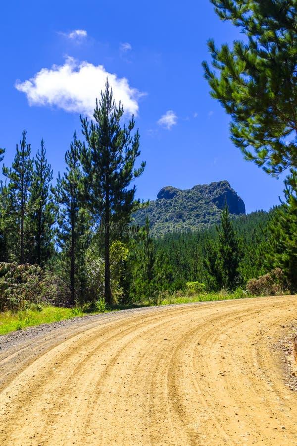 Grusväg i en skog för sörjaträd royaltyfria bilder