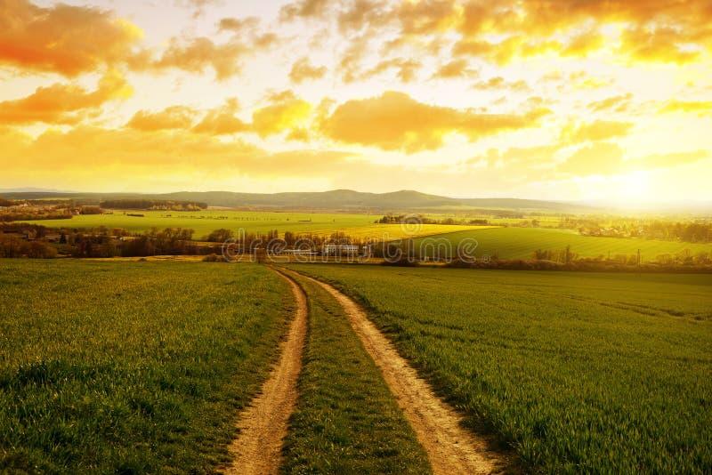 Grusväg i fält med grönt gräs på solnedgången royaltyfri foto