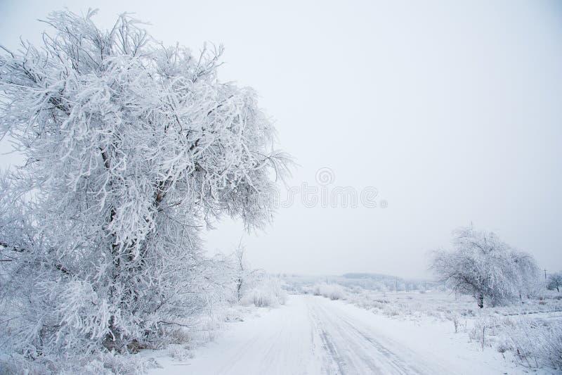 Grusväg i skogen i vinter arkivbilder