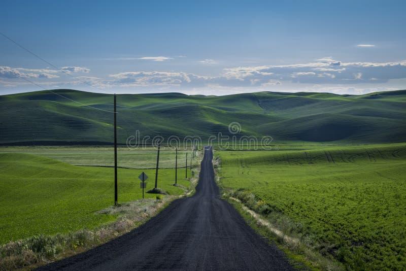 Grusväg i vetefälten av den östliga staten Washington royaltyfri bild
