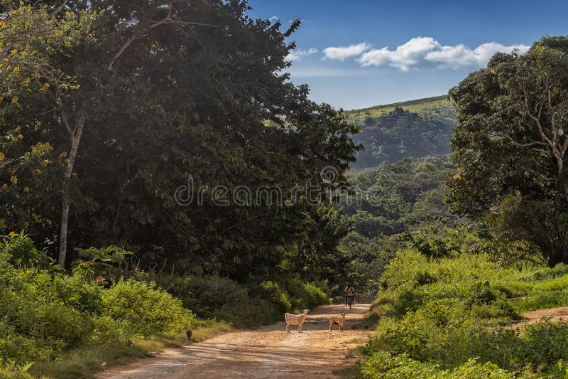 Grusväg med den afrikanska motorcyklisten och getter, malangeafrica landsbygd, Angola arkivbild