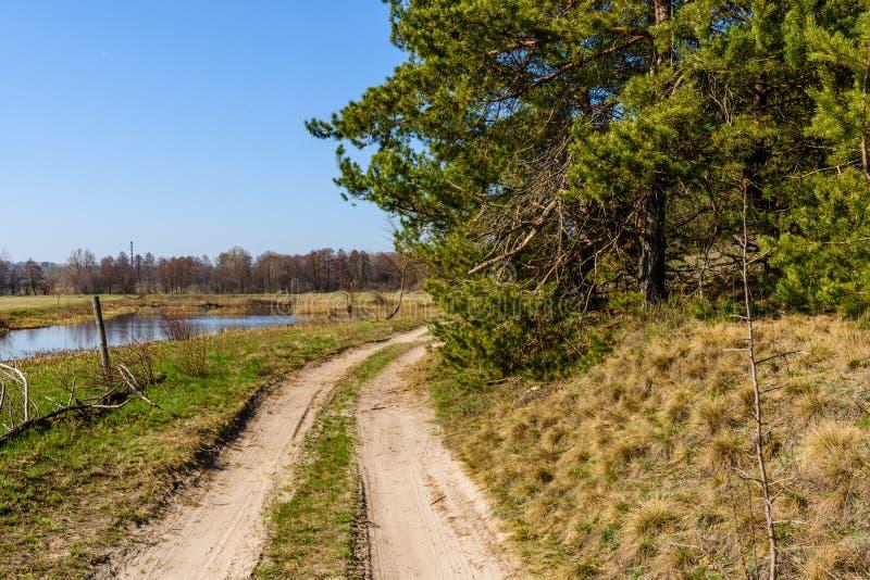 Grusväg nära skogen på den tidiga våren royaltyfri bild
