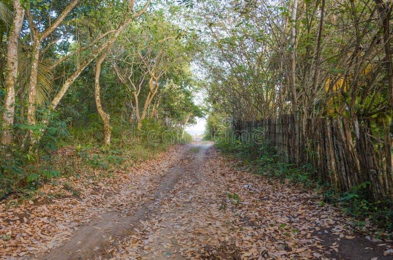 Grusväg som kommer till stranden bredvid träd och grön vegetation Trästaket på andra sidan arkivfoton