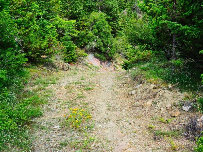 Grusväg till och med bergskog royaltyfri foto
