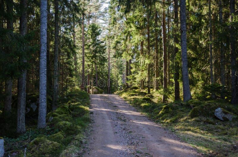 Grusväg till och med en skinande skog arkivfoto