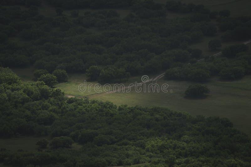 Grusväg till och med kanten av skogen royaltyfri fotografi