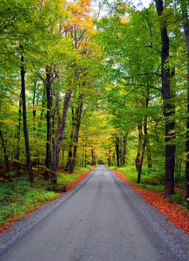 Grusväg till och med skog royaltyfri foto