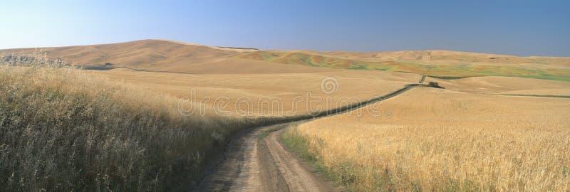 Grusväg till och med vetefältet, Kamiak Butte, S E washington arkivfoton
