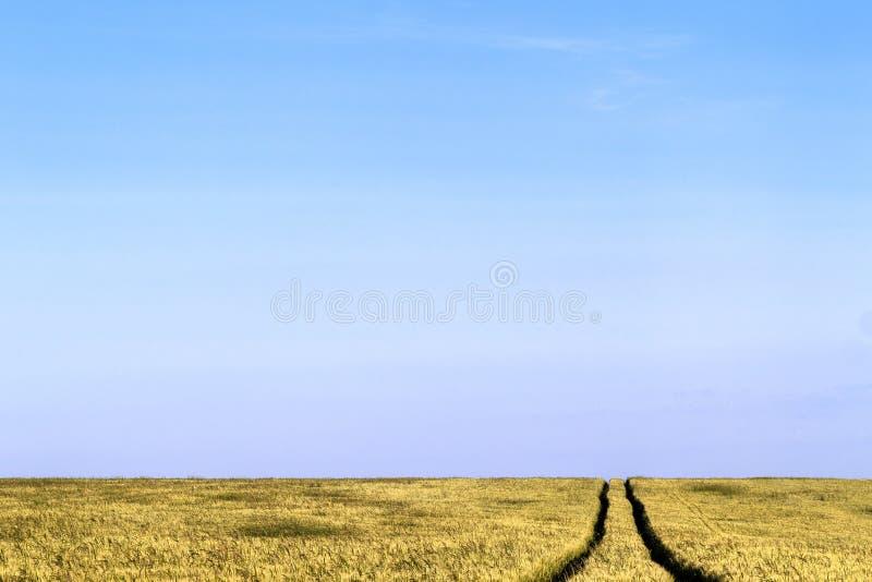 Grusvägbana i ett landskap för vetefält i sommar royaltyfri fotografi
